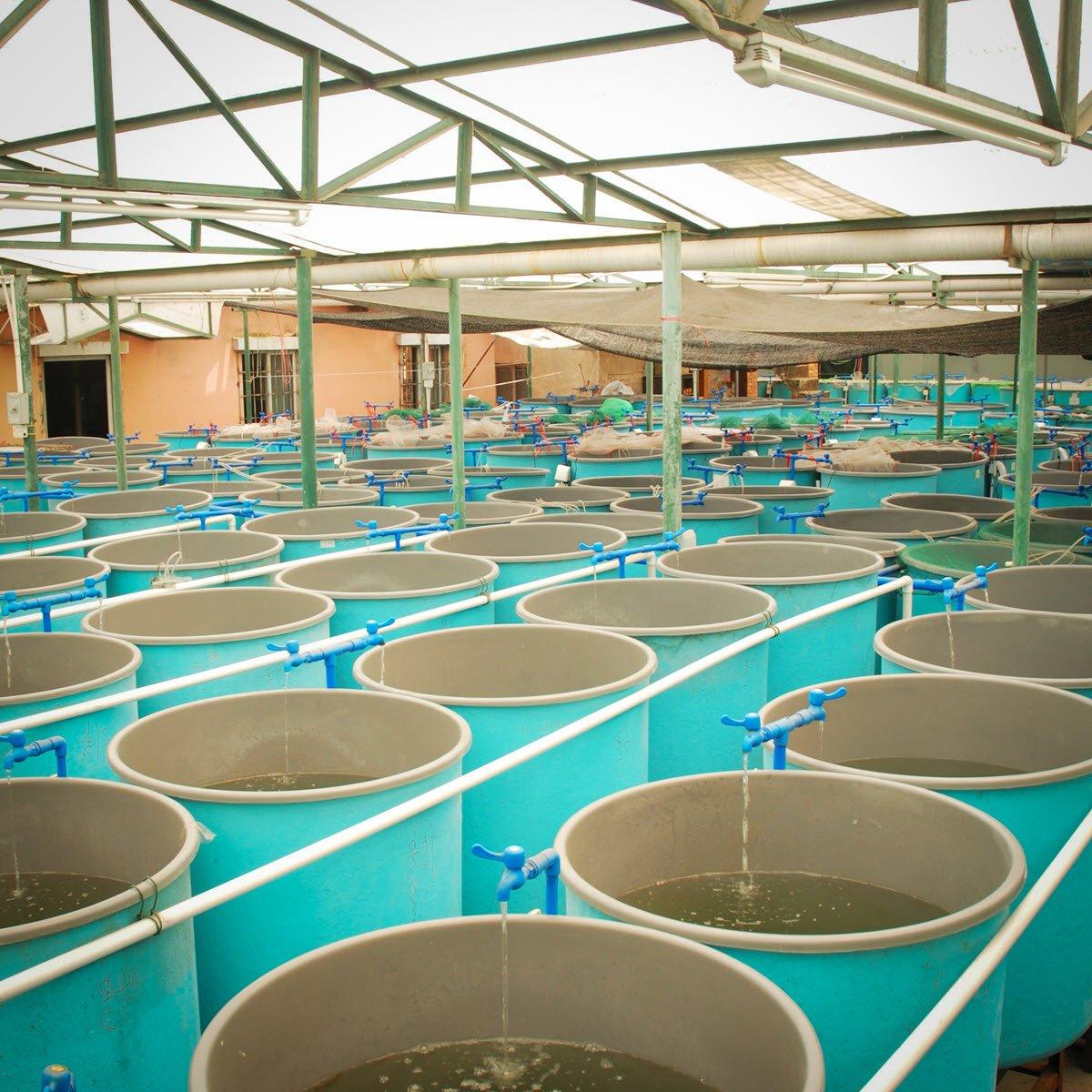 aquaculture laboratory